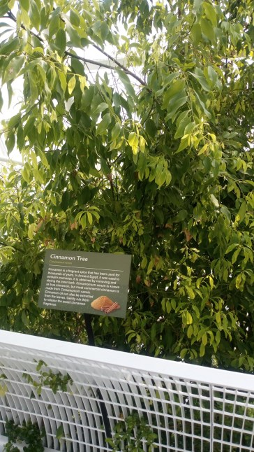 A cinnamon tree. It was recommended to rub the leaves to release the fragrance. Unfortunately, I couldn't smell anything.
